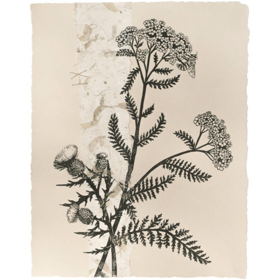 Yarrow and Thistle